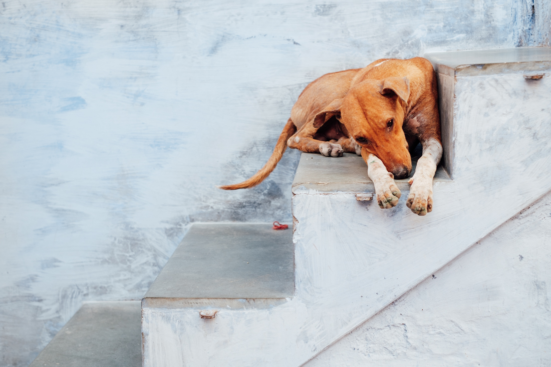 India street photography 111