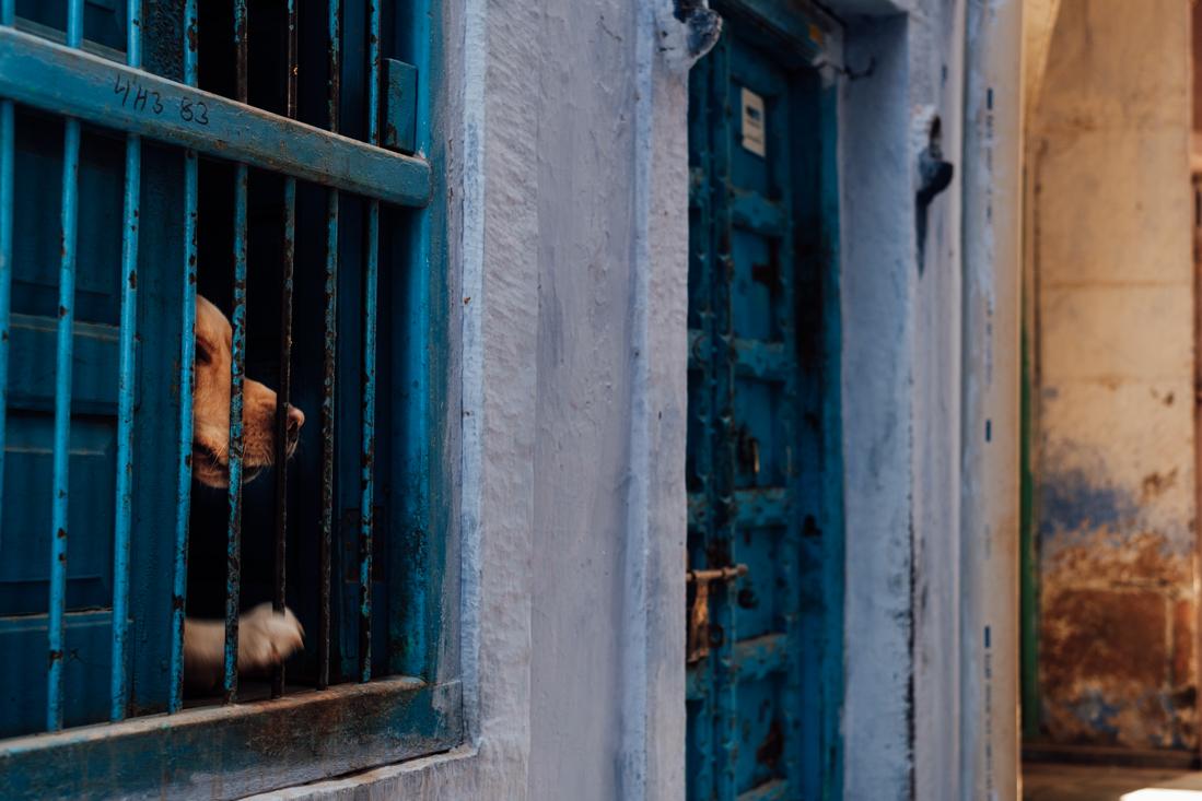 India street photography 112